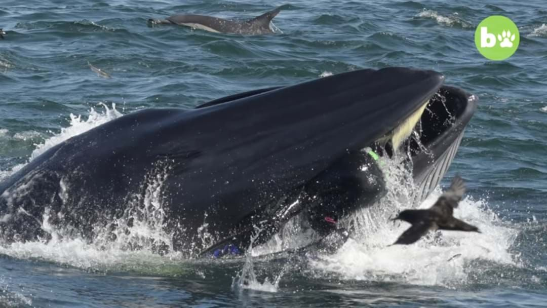 Article heading image for Man Nearly Gets Eaten By Whale - And Lives To Tell The Tale