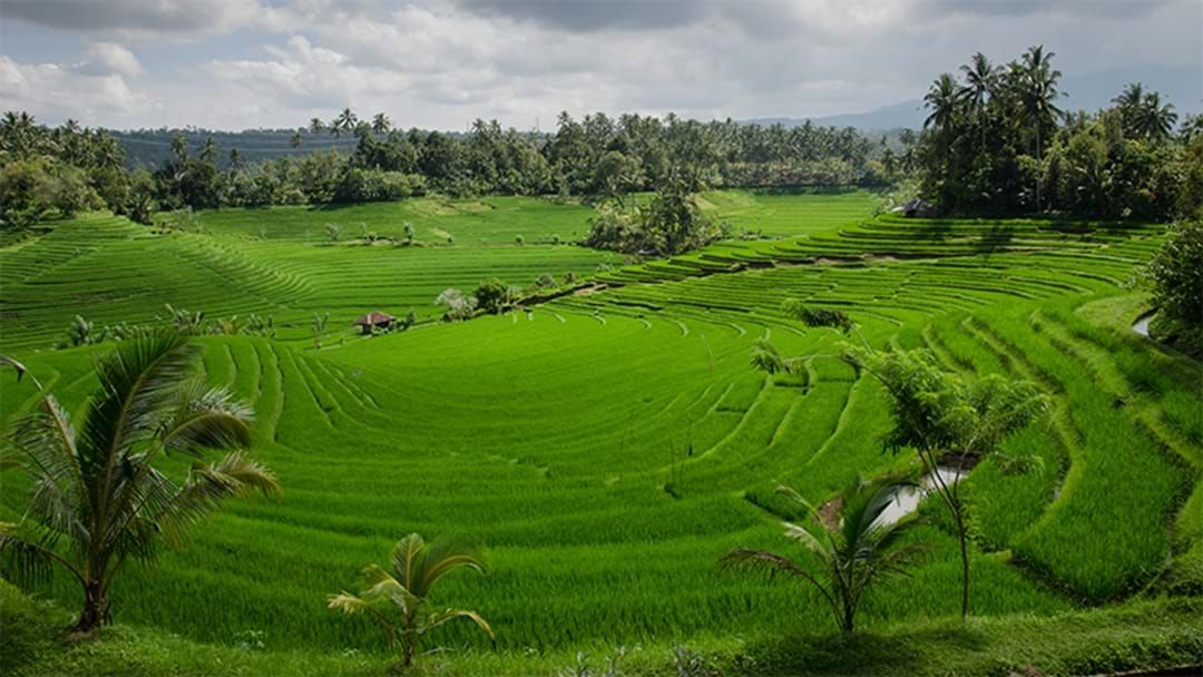 Article heading image for Magnitude 6.1 Earthquake Strikes Bali