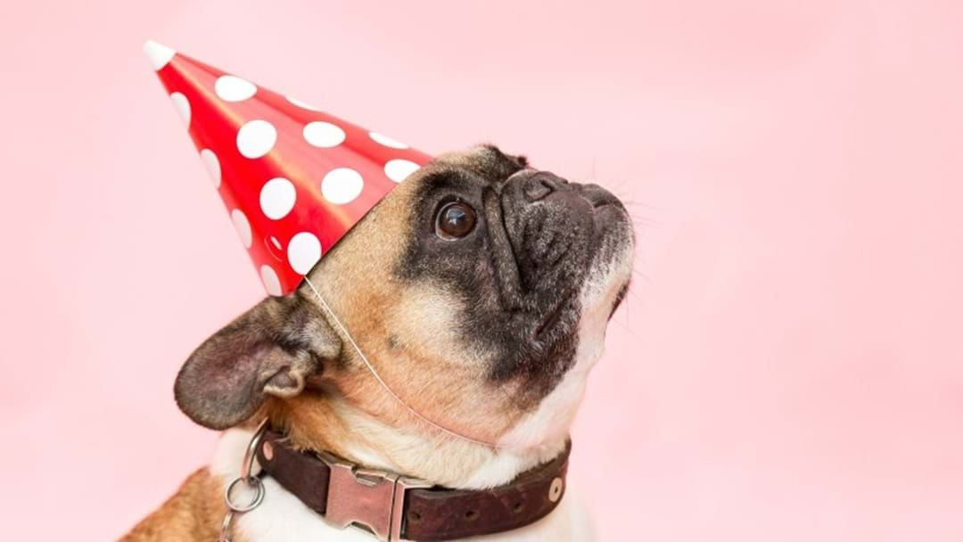 Article heading image for YAS: Victoria's Pet-Friendly Rental Laws Come Into Effect