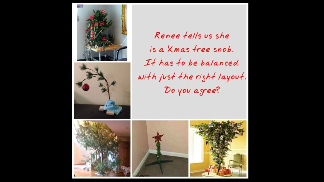 Article heading image for Are You a Christmas Tree Snob?