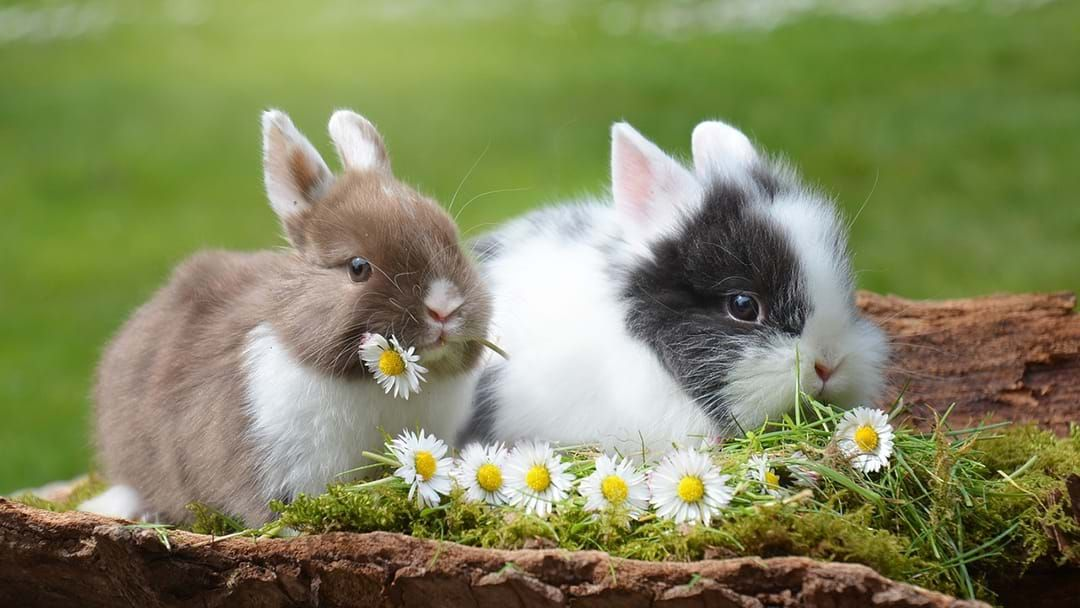 Article heading image for This Is The Melbourne Forecast For Easter & The Long Weekend