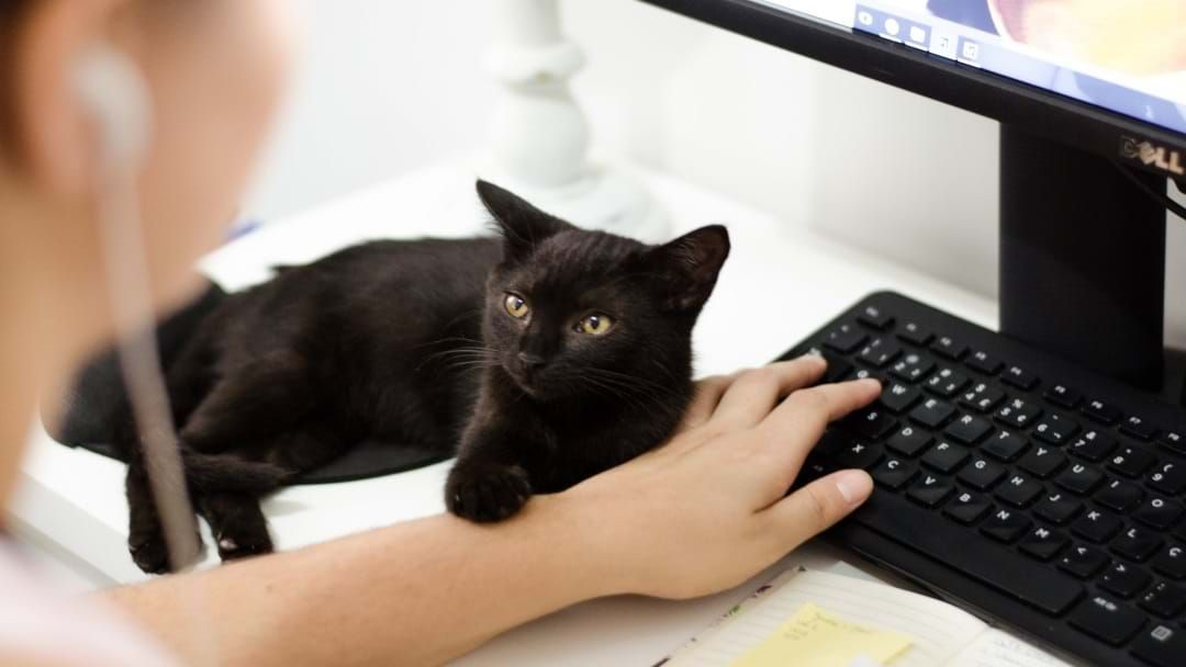 Article heading image for Adopt A Townsville Cat From $50 Across Meow-Vember