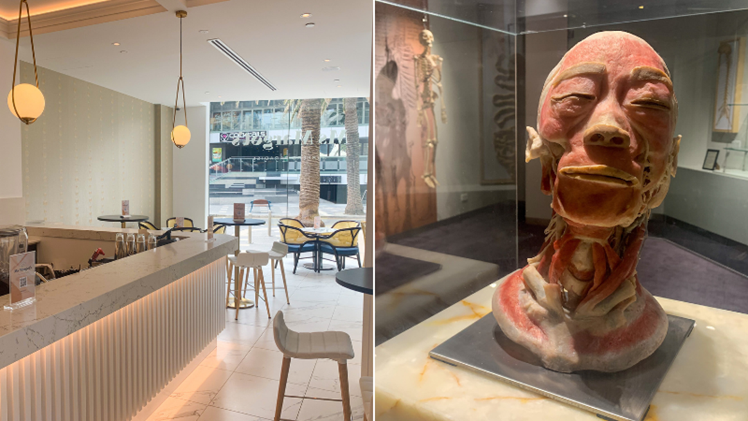 Article heading image for Hilton Surfers Paradise Welcomes Ms Margot's Bar & Eats And The Real Human Anatomy Exhibition!