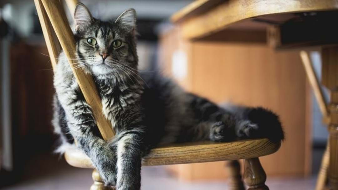 Article heading image for Bridge Is Certain Her Cat Loves Country Music!