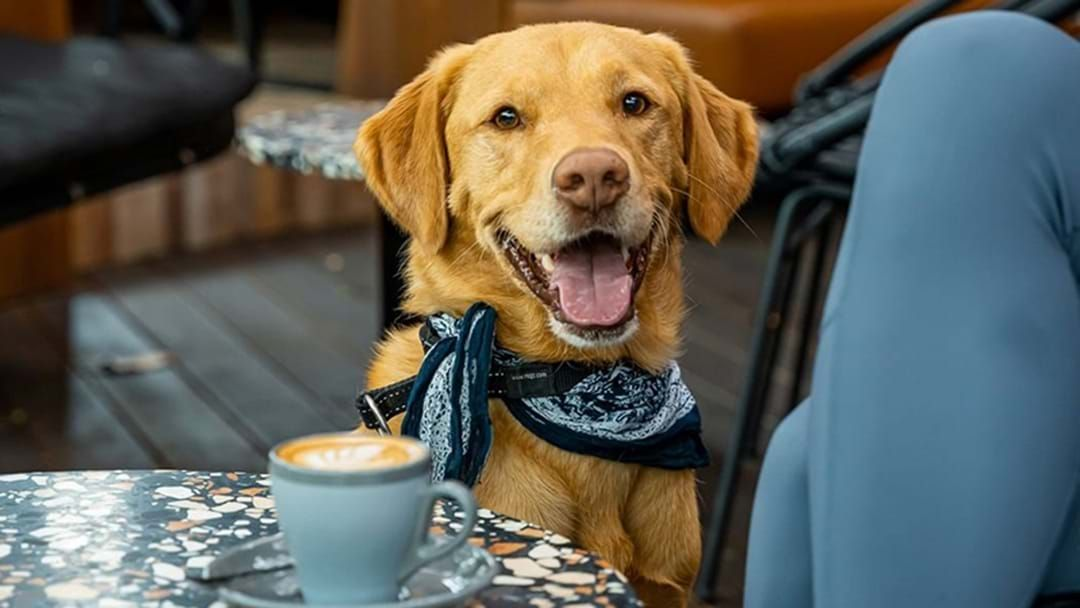 Article heading image for Turns Out, There's Actually An App In Adelaide That Tells You Which Venues Are Dog Friendly!