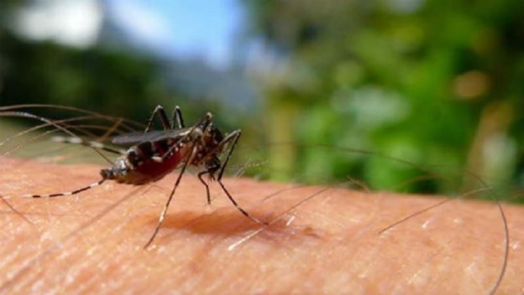 Article heading image for Council Ready To Combat Rain Triggered Mozzies