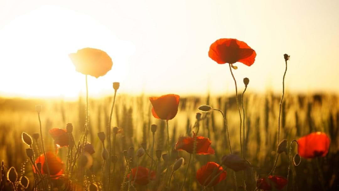 Article heading image for Where ANZAC Ceremonies Are Happening Near You This Thursday