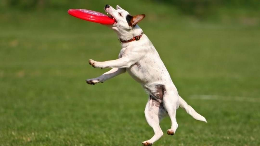 Article heading image for National Frisbee Phenomenon Happening In Townsville, No Doggos Allowed Though