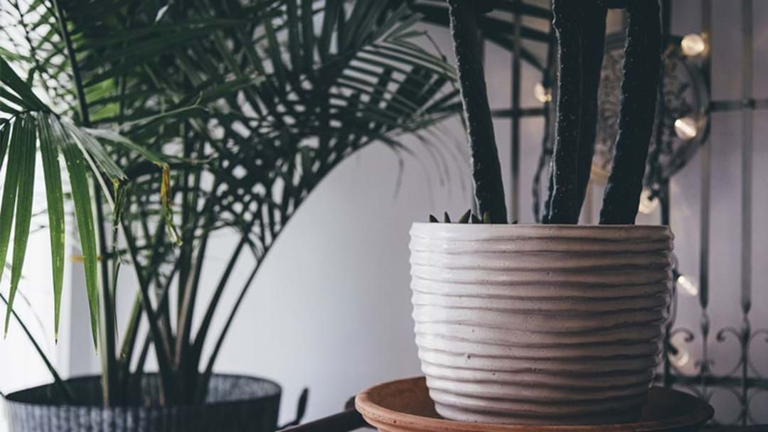 Article heading image for Women With Lots Of House Plants Are Happier & Live Longer