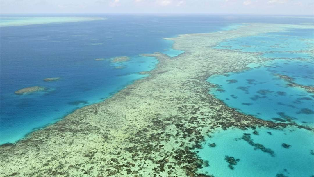 Article heading image for Great Barrier Reef Not Recovering As Well As Previous Years