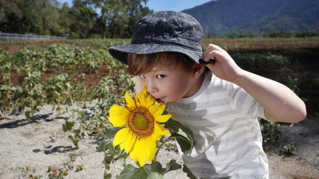 Article heading image for Is Brian the Sunflower Back!?