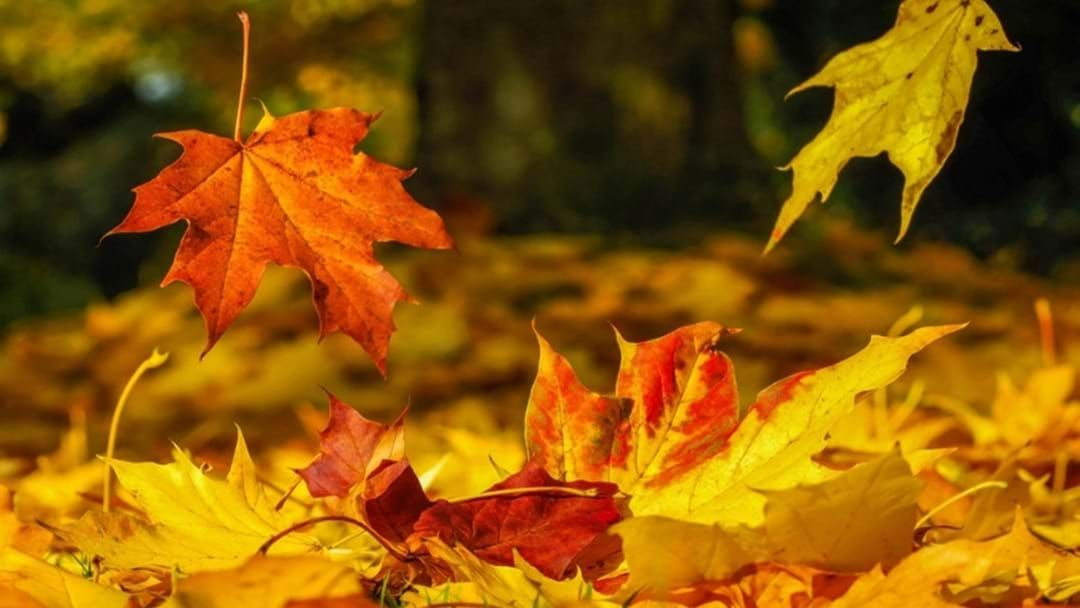 Article heading image for Celebrate Autumn With Foster Anglican Church This April