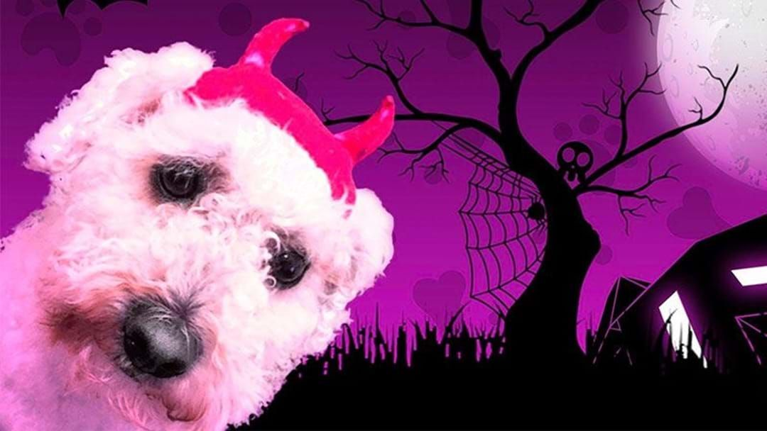 Article heading image for There's A Free Halloween Party For Your Dog In Perth