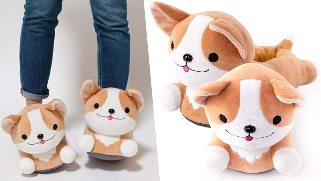 Article heading image for You Absolutely Need These Heated Dog Slippers This Winter