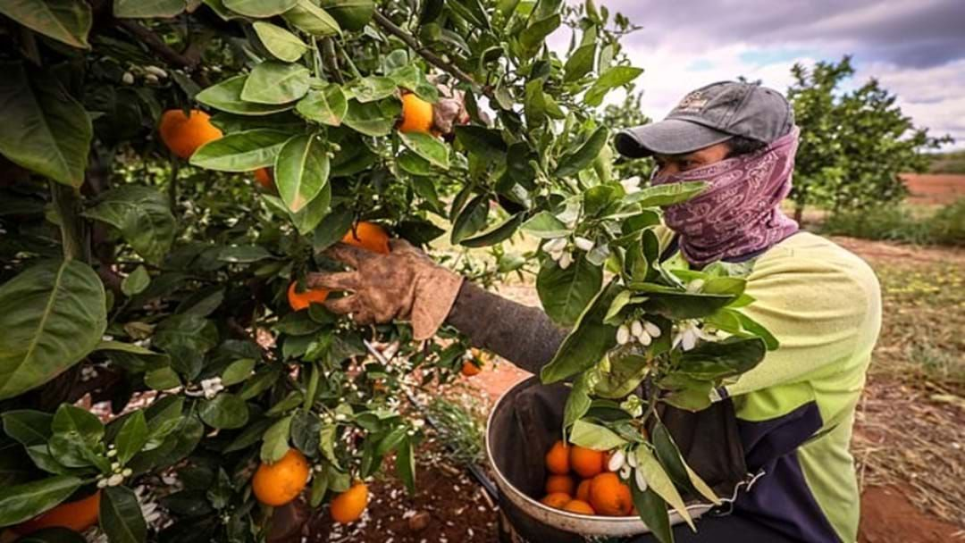 Article heading image for Filling the Gap: New Australian Agriculture Visa For Seasonal Workers