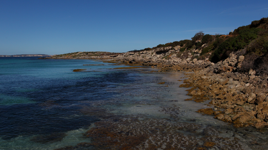 Article heading image for Pfizer Available for Kangaroo Island Residents as Young as 12