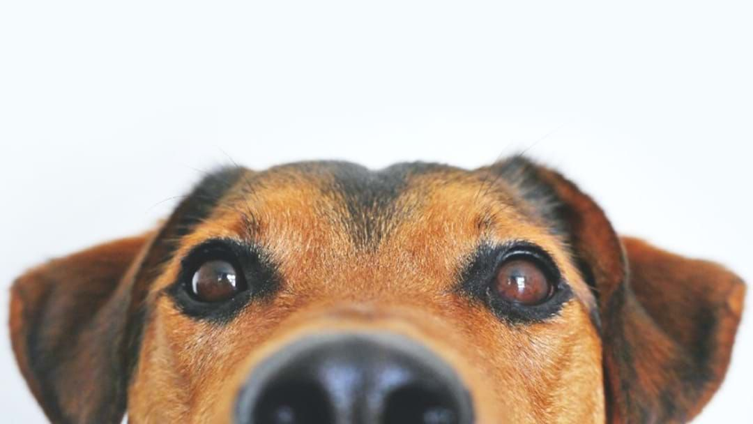 Article heading image for Creating A Doggy First-Aid Kit