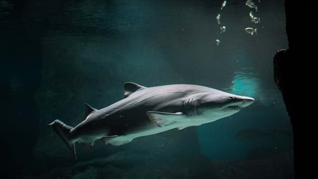 Article heading image for Newcastle Has Employed A Super Drone To Save Us From Potential Shark Attacks
