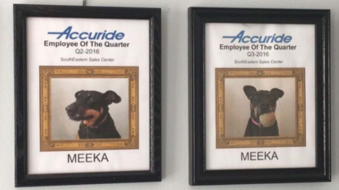Article heading image for Bloke Works From Home, Awards His Dog Employee Of The Month