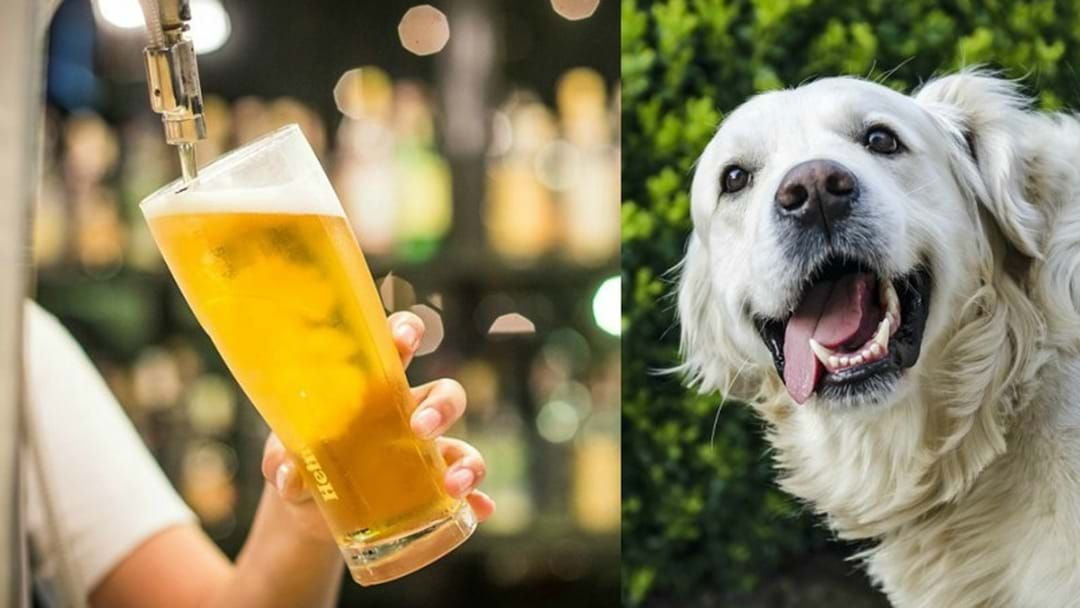 Article heading image for You Can Sink A Few Schooeys With Your Dog At This Sunday Sesh In Brisbane