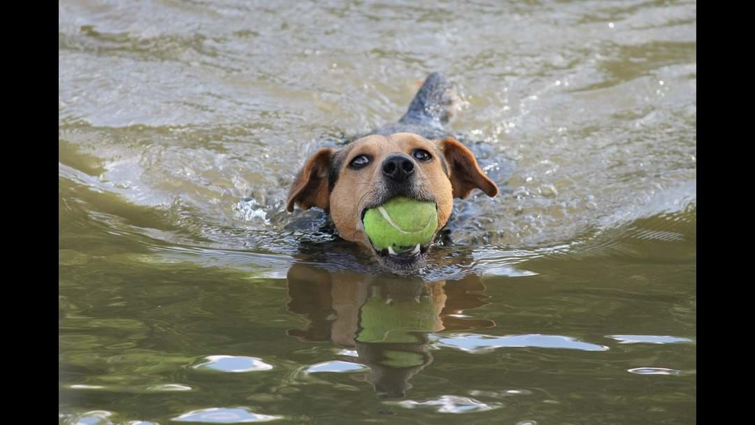 Article heading image for Blue-Green Algae Warning For Pets
