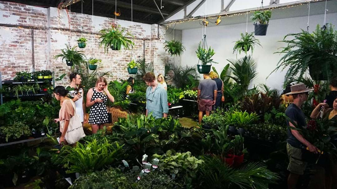 Article heading image for A Massive Indoor Plant Sale Is Popping Up In Newcastle This Weekend!