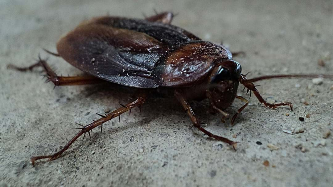 Article heading image for Bloke Literally Shoots Himself In The Foot Trying To Kill A Cockroach