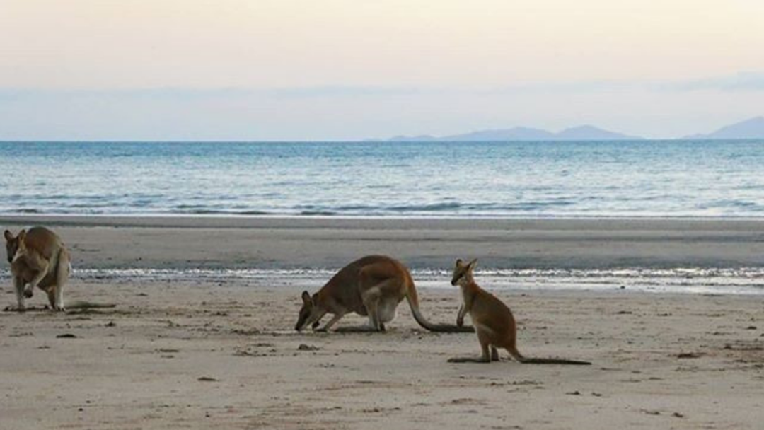 Article heading image for Meet Mackay's Newest, Cutest Residents These School Holidays