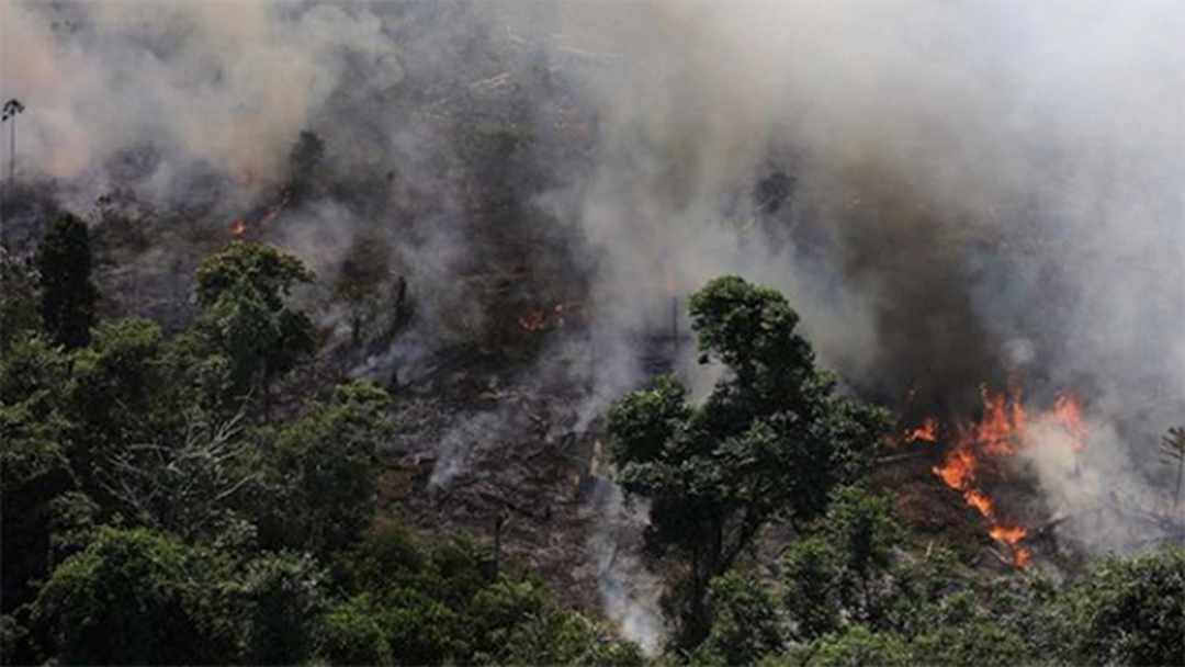 Article heading image for The Amazon Rainforest Is Burning At An Alarming Rate