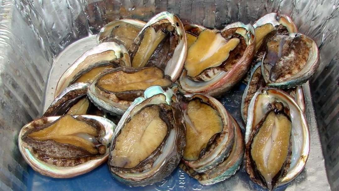 Article heading image for Two Busselton Men Have Been Fined For Illegal Abalone Haul