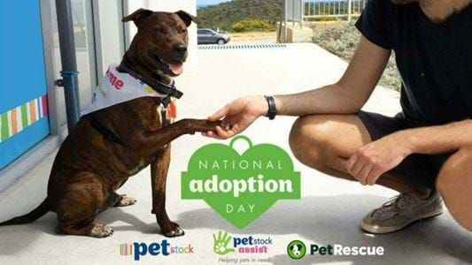 National Pet Adoption Day is this