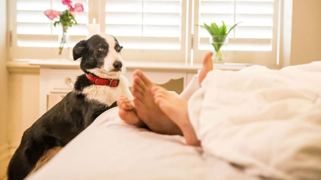Article heading image for NEARLY HALF OF CANBERRANS WOULD PREFER A PET OVER A HOUSEMATE
