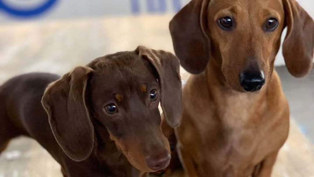 Article heading image for Melbourne's Festival Dedicated To Sausage Dogs & Daiquiris Is Back This Weekend