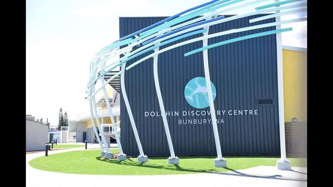 Article heading image for Dolphin Discovery Centre Opens This Week