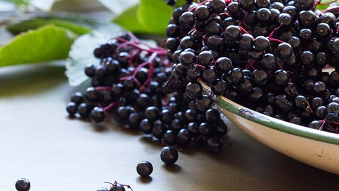 Article heading image for Uni Pulls Claims Elderberry Fights The Flu