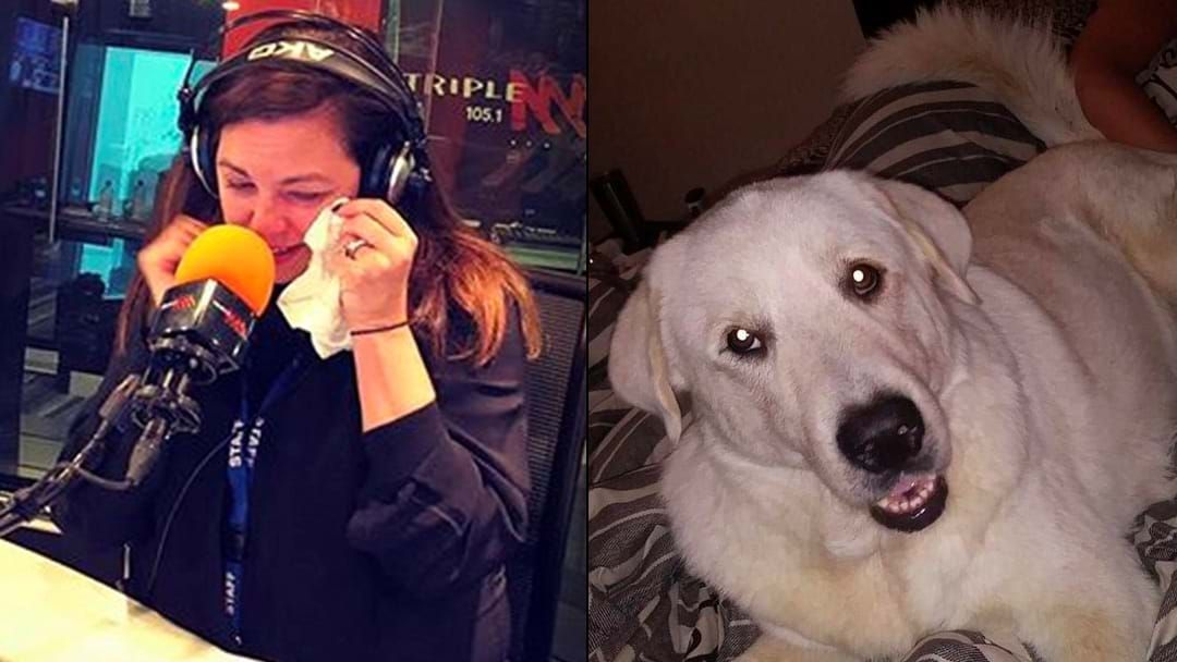 Article heading image for LISTEN | Jane Goes The Blub Telling The Heroic Story Of Zero The Dog