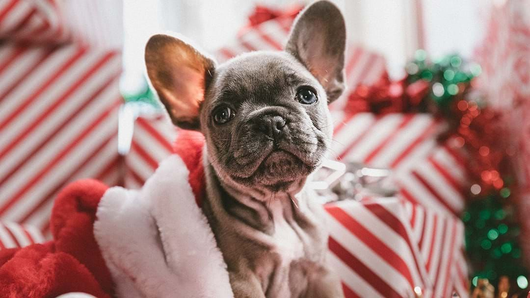 Article heading image for Here Are The Places You Can Take Your Pets To Get A Santa Photo This Year