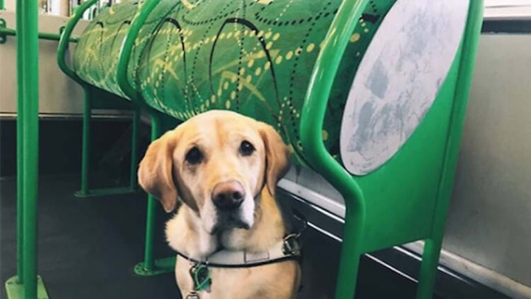 Article heading image for Some Good Doggos Will Be Riding Trams This Tuesday & They Are Ready For Pats