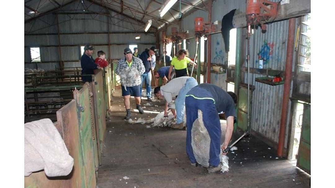 Article heading image for Free SHEARING COURSE to try boost the industry!
