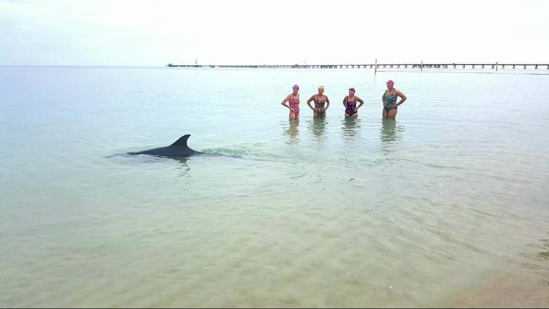 Article heading image for Surprise Busselton Jetty Swim Contender