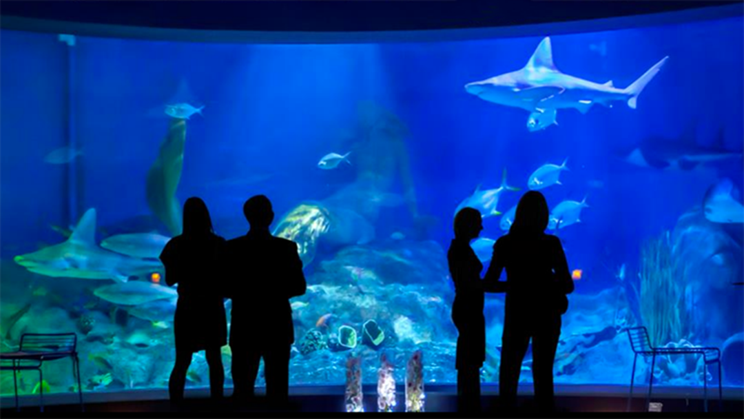 Article heading image for You Can Spend Valentine's Day Dinner At Melbourne Aquarium