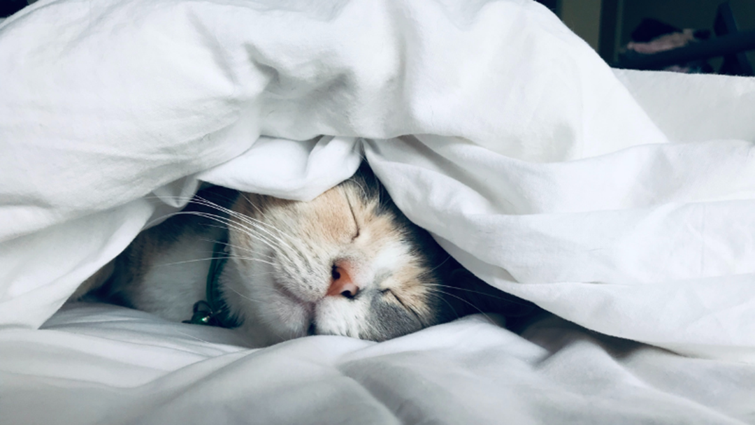 Article heading image for This Is Why Your Cat Sleeps At The End Of The Bed