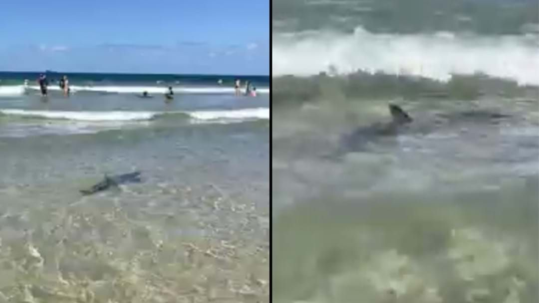 Article heading image for Shark Spotted Swimming Close To The Shore At Byron Bay