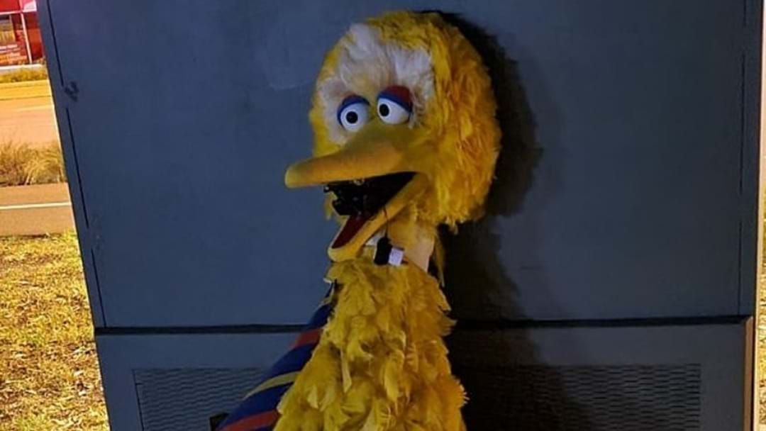 Article heading image for SA Police Seek Woman In Relation To Alleged Big Bird Costume Theft