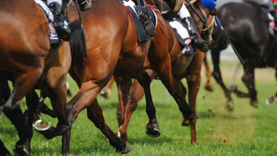 Article heading image for Scam Warning For Melbourne Cup Punters