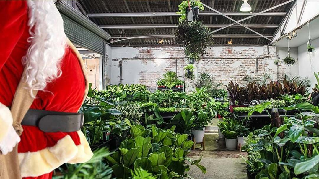 Article heading image for Another Massive Indoor Plant Warehouse Sale Is Coming To Sydney