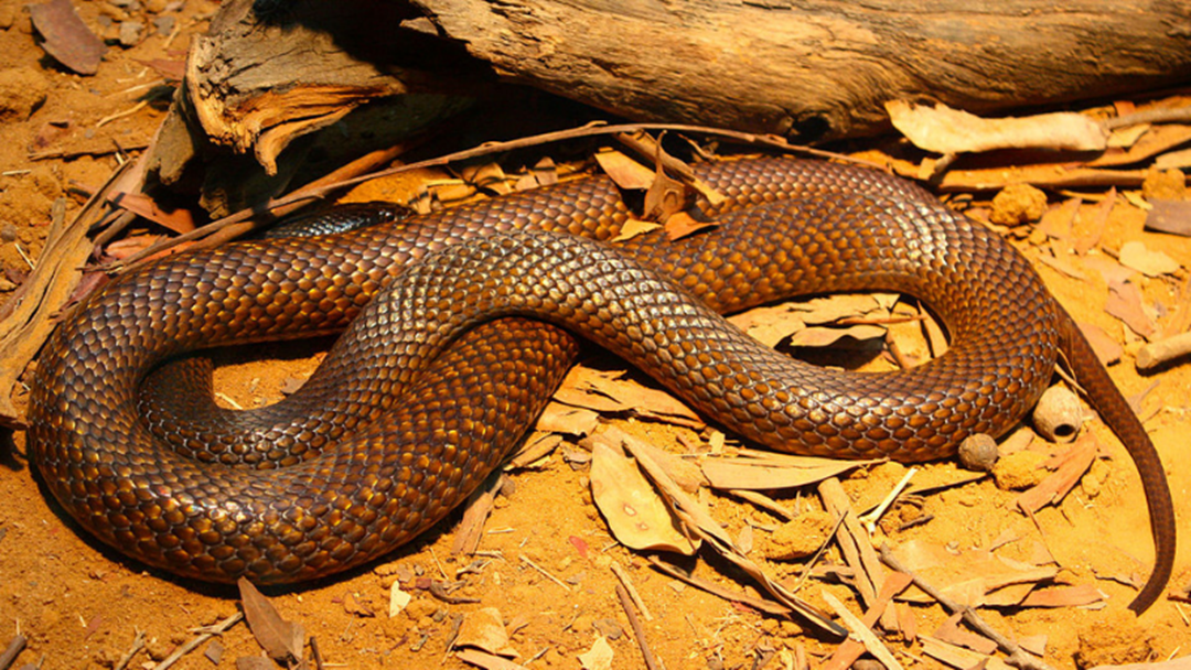 Article heading image for Snake Season Is Back On The Border!