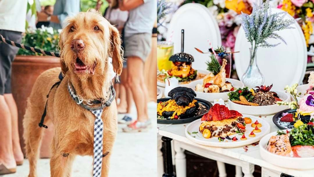 Article heading image for The Best Dog-Friendly Venues In Sydney To Take Your Pup This 'National Pet Day'