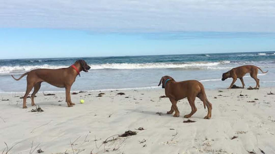 Article heading image for Perth's Dog Friendly Beaches Where Your Pup Can Run Free