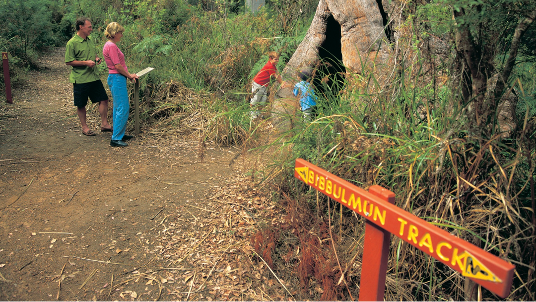 Article heading image for Trail Development Explores New Paths